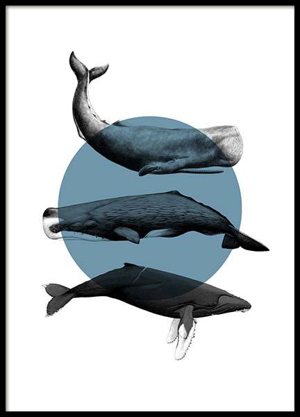 Whales Graphic Poster in the group Posters & Prints / Insects & animals at Desenio AB (10033)