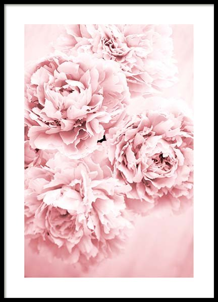 Pink Dream Poster in the group Posters & Prints / Photography at Desenio AB (10054)