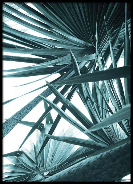 Bismarck Palm No1 Poster in the group Posters & Prints / Photography at Desenio AB (10128)