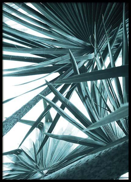 Bismarck Palm No1 Poster