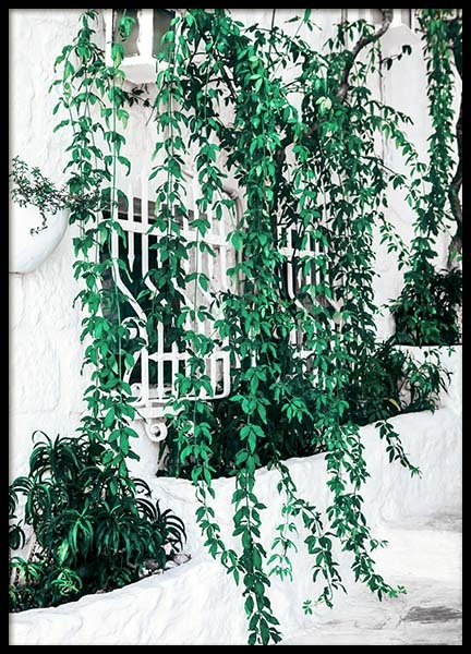 Ivy Window Poster in the group Posters & Prints / Botanical at Desenio AB (10140)