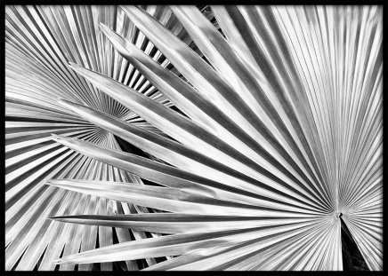 Silver Palm Poster in the group Posters & Prints / Botanical at Desenio AB (10144)