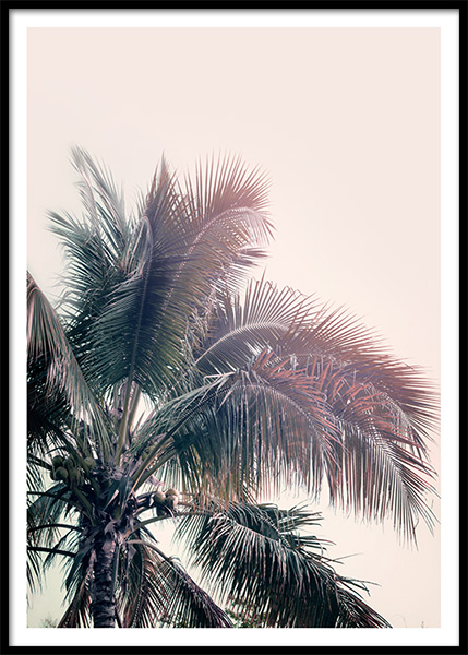 A Palm Tree Dream Poster in the group Posters & Prints / Botanical / Palms at Desenio AB (10169)