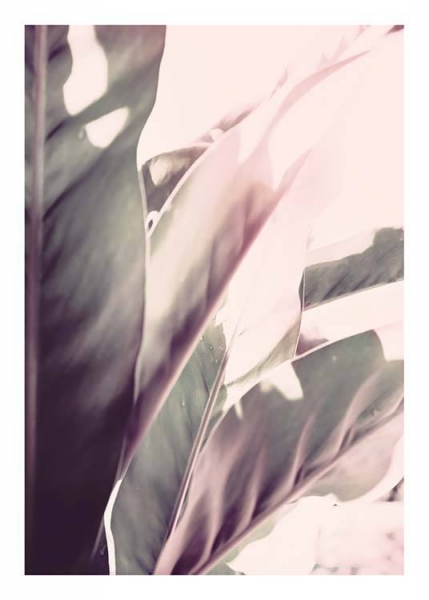 Soft Jungle Two Poster in the group Posters & Prints / Botanical at Desenio AB (10176)