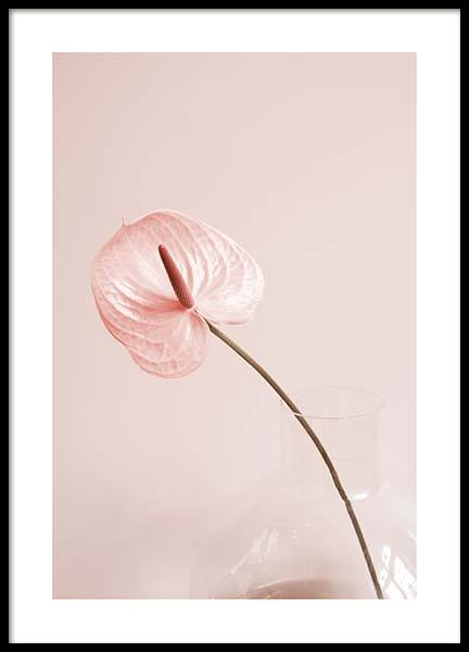 Pink Anthurium No1 Poster in the group Posters & Prints / Botanical at Desenio AB (10209)