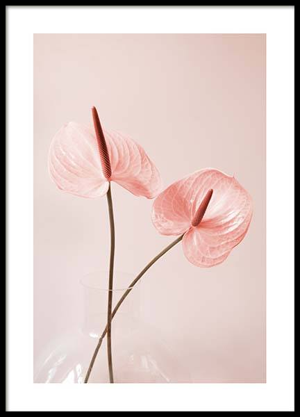 Pink Anthurium No2 Poster in the group Posters & Prints / Botanical at Desenio AB (10210)