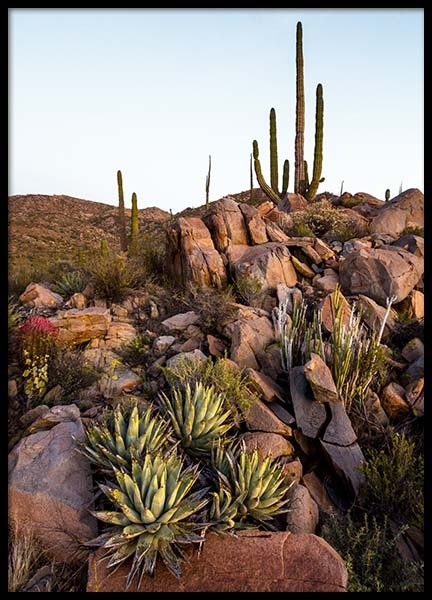 Baja Desert Poster in the group Posters & Prints / Nature at Desenio AB (10225)