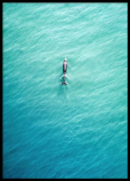 Dolphin From Above Poster in the group Posters & Prints / Nature at Desenio AB (10230)