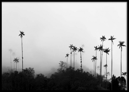 Foggy Palms Poster in the group Posters & Prints / Nature at Desenio AB (10236)