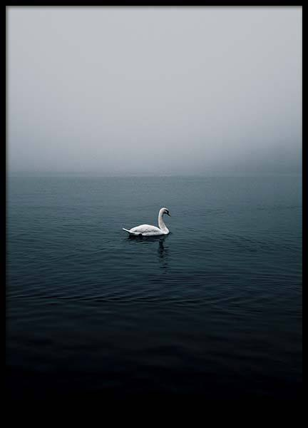 Misty Swan Lake Poster in the group Posters & Prints / Nature at Desenio AB (10242)