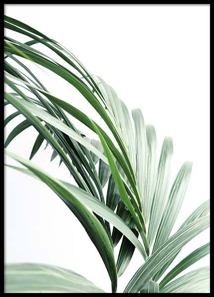 Palm Tree Leaves Close Up Poster in the group Posters & Prints / Botanical at Desenio AB (10244)