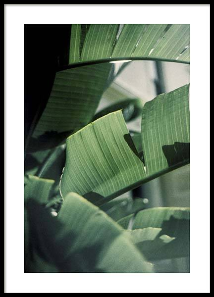 Palm Tree Close Up  Poster in the group Posters & Prints / Botanical at Desenio AB (10246)