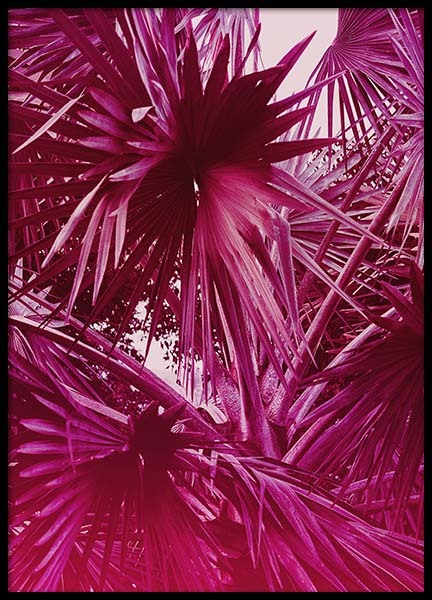 Tropical Coconut Tree Poster in the group Posters & Prints / Photography at Desenio AB (10255)