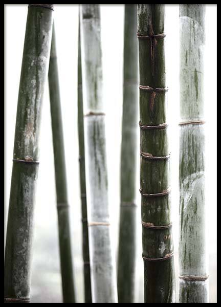 Bamboo No1 Poster in the group Posters & Prints / Botanical at Desenio AB (10287)