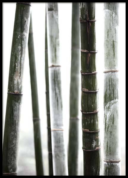 Bamboo No1 Poster