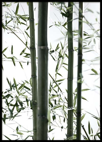 Bamboo No2 Poster in the group Posters & Prints / Botanical at Desenio AB (10288)
