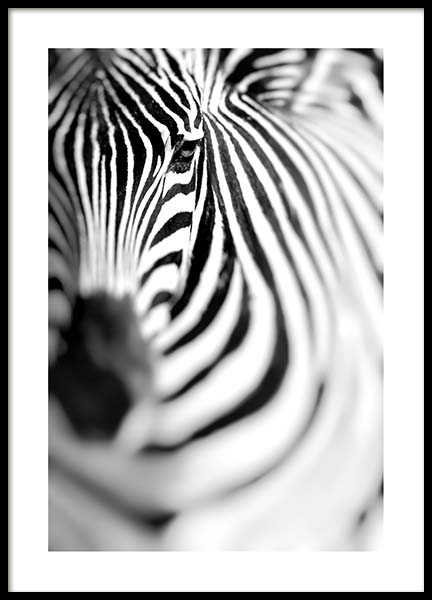 Zebra Portrait Poster in the group Posters & Prints / Black & white at Desenio AB (10400)