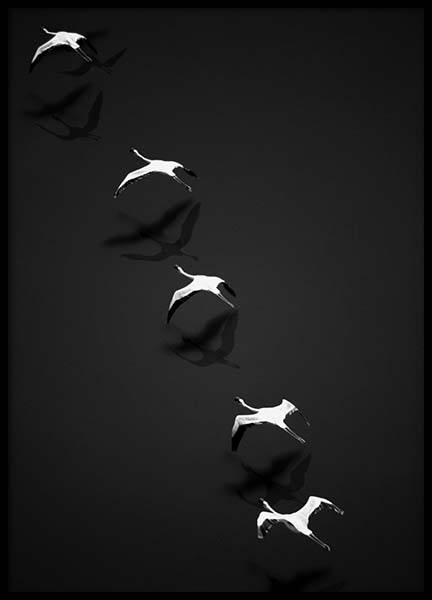 Flying Flamingos Poster in the group Posters & Prints / Black & white at Desenio AB (10402)