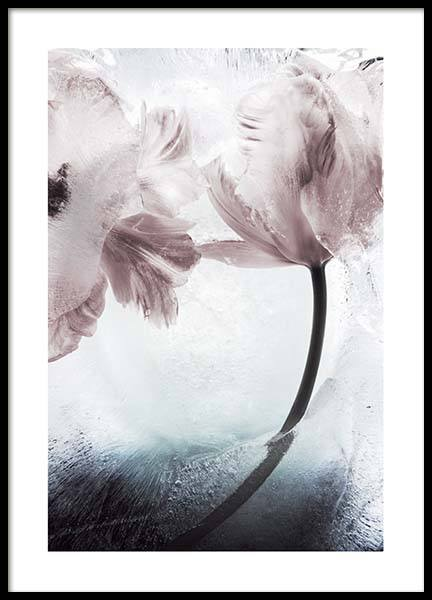 Tulipe And Ice No1  Poster in the group Posters & Prints / Photography at Desenio AB (10409)
