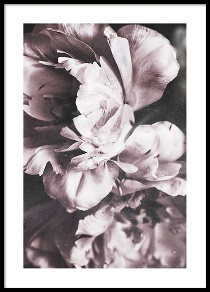 Tulip Dream  Poster in the group Posters & Prints / Photography at Desenio AB (10417)