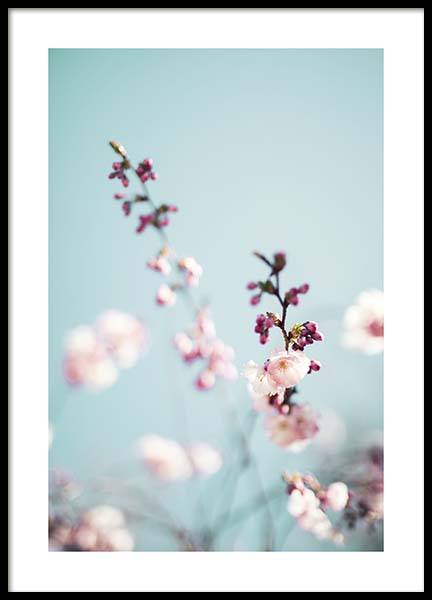 Cherry Blossom No2 Poster in the group Posters & Prints / Photography at Desenio AB (10427)