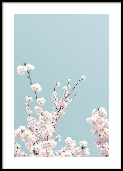 Cherry Blossom No3 Poster in the group Posters & Prints / Photography at Desenio AB (10428)