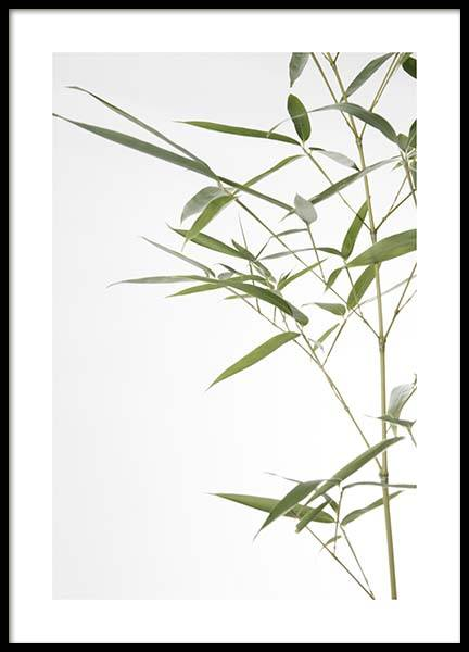 Bamboo Leaves No1 Poster in the group Posters & Prints / Photography at Desenio AB (10434)