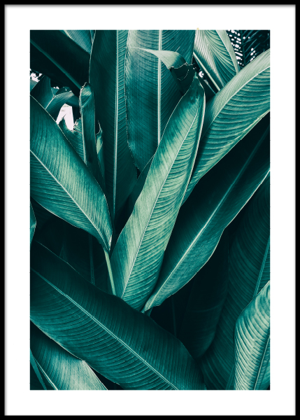 Tropical Leaves No1 Poster