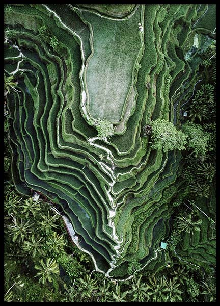 Rice Terraces Poster in the group Posters & Prints / Nature at Desenio AB (10443)