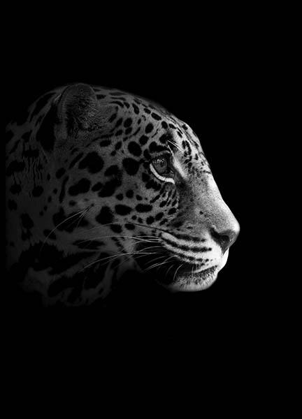 Leopard From Side Poster in the group Posters & Prints / Black & white at Desenio AB (10494)