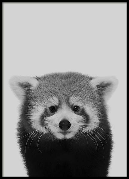 Red Panda Poster in the group Posters & Prints / Black & white at Desenio AB (10496)