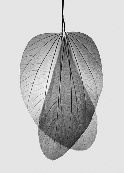 Leaf Skeleton no2 Poster in the group Posters & Prints / Botanical at Desenio AB (10521)