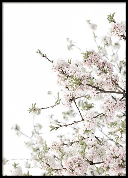 Spring Blossom No3 Poster in the group Posters & Prints / Photography at Desenio AB (10565)