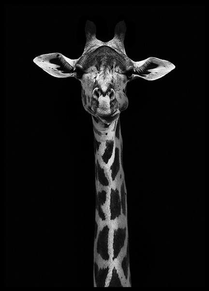 Giraffe on Black Poster in the group Posters & Prints / Insects & animals at Desenio AB (10619)
