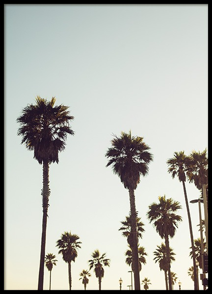 Palm Trees in California Poster in the group Posters & Prints / Nature at Desenio AB (10627)