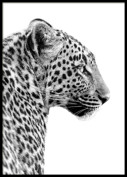 Leopard Profile Poster in the group Posters & Prints / Black & white at Desenio AB (10656)