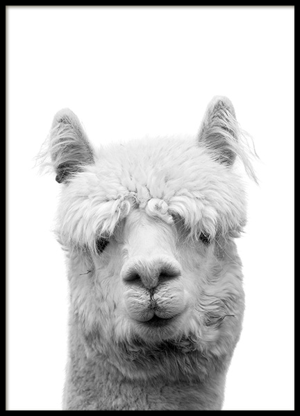 Lama B&W Poster in the group Posters & Prints / Black & white at Desenio AB (10657)