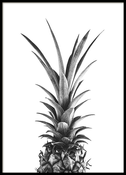 Pineapple B&W Poster in the group Posters & Prints / Black & white at Desenio AB (10658)