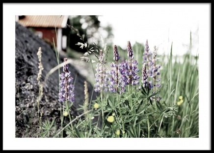 Flowering Lupines Poster in the group Posters & Prints / Photography at Desenio AB (10707)