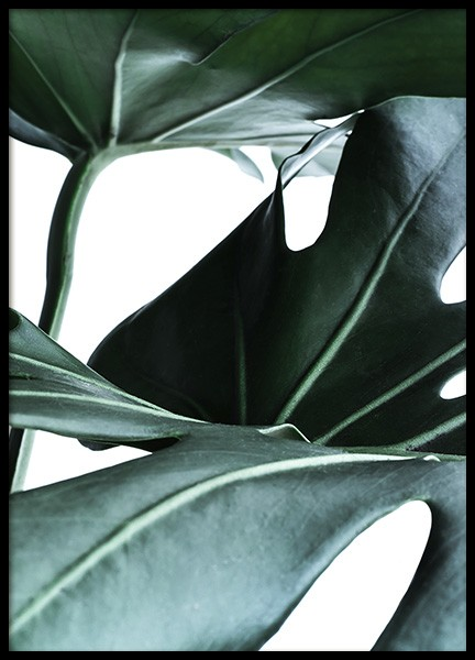 Big Monstera No.1 Poster in the group Posters & Prints / Photography at Desenio AB (10736)