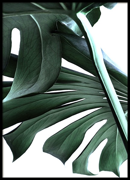 Big Monstera No.2 Poster in the group Posters & Prints / Photography at Desenio AB (10737)