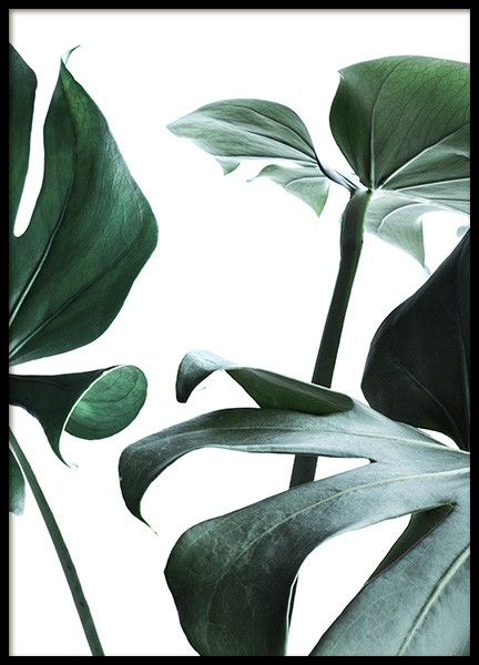 Big Monstera No.3 Poster in the group Posters & Prints / Botanical at Desenio AB (10738)