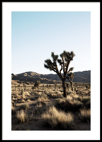 Joshua Tree National Park Poster in the group Posters & Prints / Nature at Desenio AB (10798)