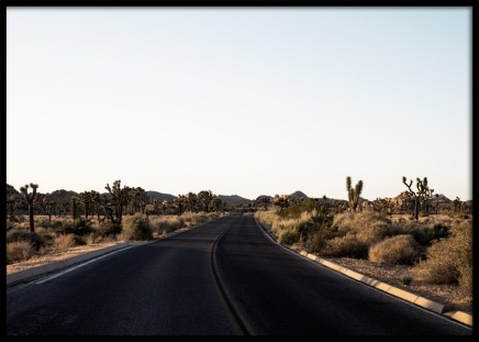 Joshua Tree Road Poster in the group Posters & Prints / Photography at Desenio AB (10799)