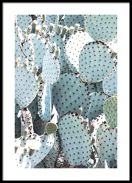 Pastel Pear Cactus No1 Poster in the group Posters & Prints / Botanical at Desenio AB (10833)