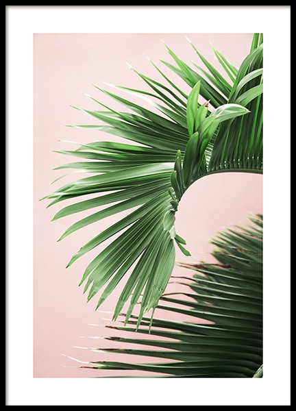 Pink and Green Palm No2 Poster in the group Posters & Prints / Photography at Desenio AB (10856)