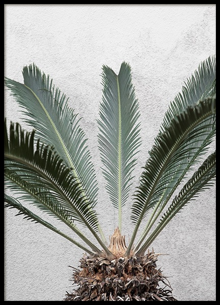 Pineapple Palm Poster in the group Posters & Prints / Botanical at Desenio AB (10858)