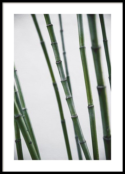 Bamboo Poster in the group Posters & Prints / Botanical at Desenio AB (10859)