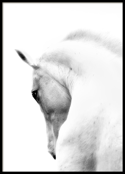 Fading Horse No2 Poster in the group Posters & Prints / Black & white at Desenio AB (10874)