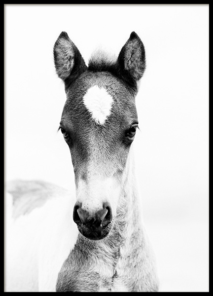 Horse Foal Poster in the group Posters & Prints / Black & white at Desenio AB (10877)